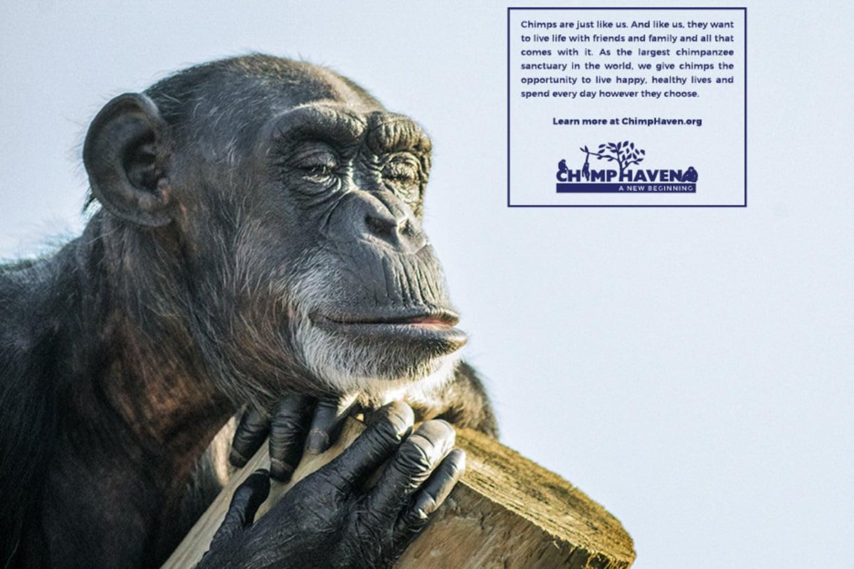 Chimp_Haven_Poster1_thumb