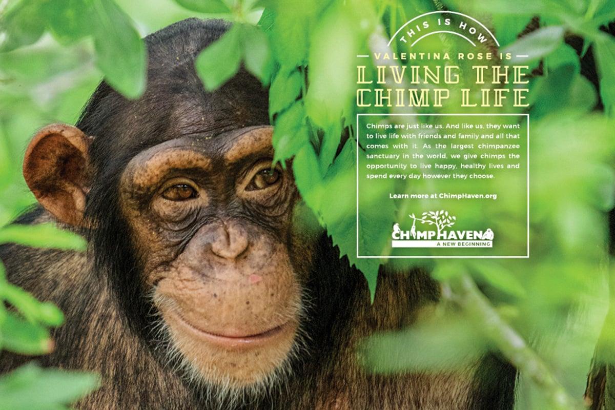 Chimp_Haven_Poster2_thumb