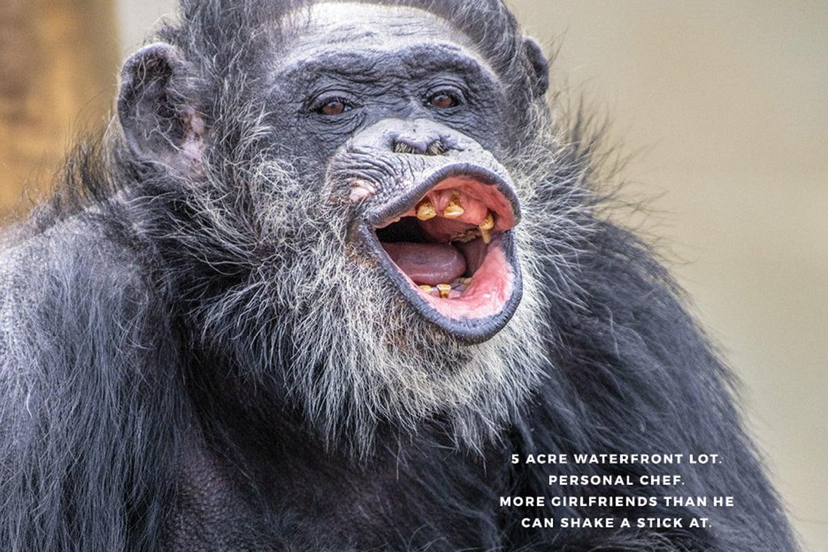Chimp_Haven_Poster4_thumb