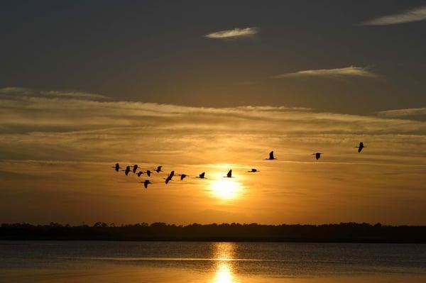 beach-bird-birds-235787