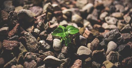 COVID_post4_growth