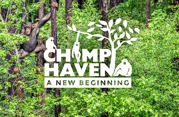 chimp_haven_thumb3